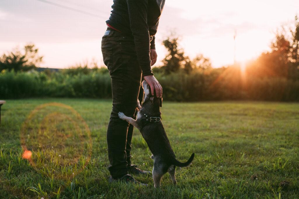 ihminen seisoo auringonlaskussa silittämässä koiraa